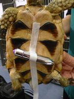 vibrating tortoise
