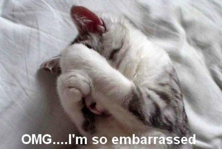 funny-cat-looking-embarrassed-445x299