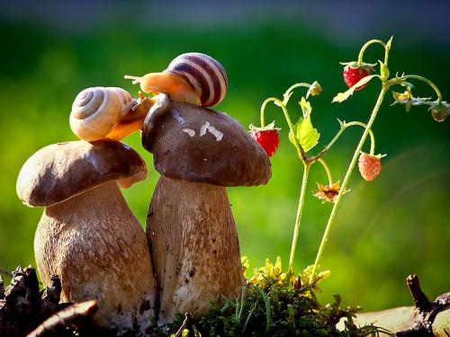 Vyacheslav Mishchenko snails